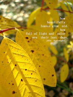 How beautifully leaves grow old; how full of light and color are their last days. -- John Burroughs