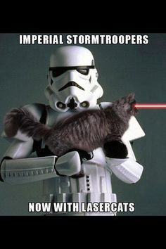 16 Best Laser Cats Images In 2013 Cats Animaux Funny