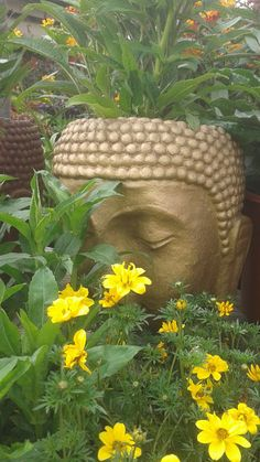 Buddha planter can stained any color, Gold $50.