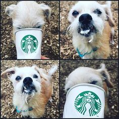 It's Puppuccino Pal Tuesday! Kitsap Humane Society in Silverdale, WA, has a weekly tradition of treating a lucky dog to some well-deserved Starbucks. These doggies aren't getting lattes or granitas; they're being served Puppuccinos, a Starbucks secret menu item made specifically for dogs
