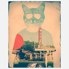 Cool Cat Print 11x14 by Ali Gulec, $25, now featured on Fab.