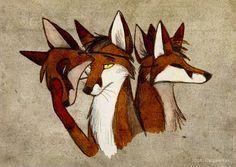 culpeo fox - Recherche Google