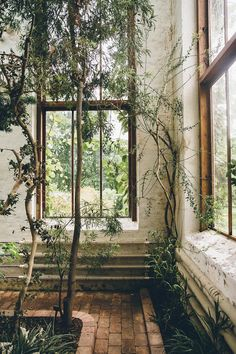 This dreamy glasshouse in Lund makes you feel like an old Victorian plant hunter the moment you step inside.