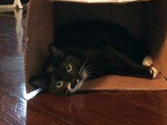 Freddie Cat | Pawshake
