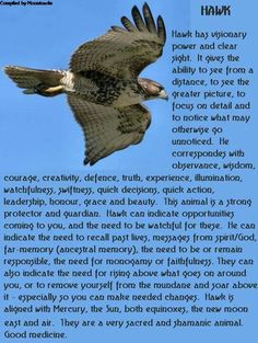 Your Animal Spirit Guide for March is The Hawk – Witches Of The Craft® Hawk Spirit Animal, Spirit Animal Totem, Animal Spirit Guides, Animal Totems, Animal Symbolism, Animal Reiki, Spiritual Animal, Tatoo, Witches