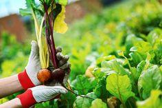 From HAMK Lepaa. Promotion, Gardening, Fruit, Food, Lawn And Garden, Essen, Meals, Yemek, Eten