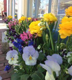 Springtime on nantucket. Jordan William Raveis flower box by Garden Design, Julie Jordan