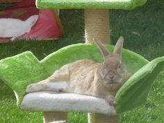 Cat beds can make great perches for rabbits