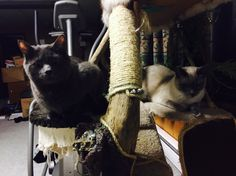 Louellen and Eisa on our homemade cat tree