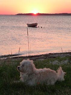 Der kleine Hund und das Meer!
