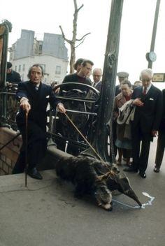 Salvador Dali taking his anteater for a walk in Paris