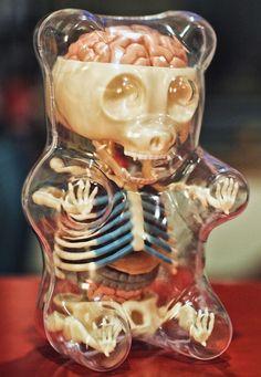 #GummiBear #Anatomy #Model #Puzzle