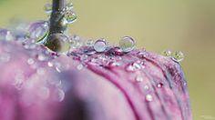 rosee | Flickr - Photo Sharing!