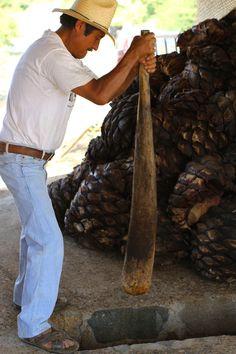 Crushing the roasted agave ... Minero