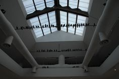Central Pavilion - More of Catalan's pigeons