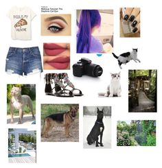 """""""Having fun with pets outside"""" by mrsmaurafandoms on Polyvore featuring Topshop, Giuseppe Zanotti, women's clothing, women, female, woman, misses and juniors"""