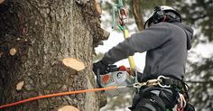 Tree Removal Adelaide with 29 years of experience. Fully licensed & insured tree cutting & pruning, stump removal services in Adelaide at low cost. Milton Georgia, Emergency Tree Removal, Tree Lopping, Tree Arborist, Tree Specialist, Tree Removal Service, Stump Removal, Dry Tree, Tree Surgeons