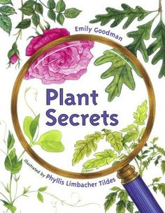 Plant Secrets by Emily Goodman | Simple text and colorful illustrations show the major phases of plant growth: seed, plant, flower, and fruit.