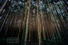 Forest in the Nakasendo Trail by PAkDocK @PAkDocK