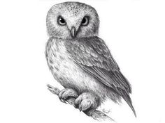Stay focused to learn how to draw an owl. Make a Owl drawing in a realistic way with very simple steps. Start from basic and explore 225 kinds of owl from 2 families Owl Sketch, Realistic Eye Drawing, Felt Owls, Beautiful Owl, Baby Owls, Animal Drawings, Owl Drawings, Drawing Sketches, Drawing Art