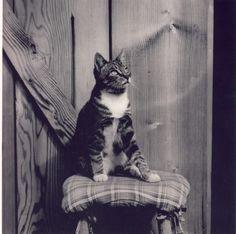 Edward Weston, cat in photography