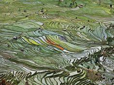 Edward Burtynsky WATER Web Gallery - Rice Terraces, Western Yunnan Province, China, 2012