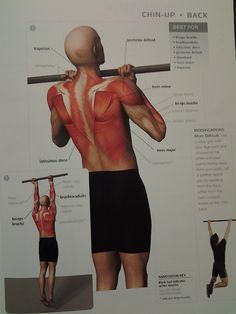 muscle diagram - BACK: chin-up  (back muscles, biceps brachii, posterior deltoid)  ? rep (start with jumping up and lowering down slowly — half chin-ups!)