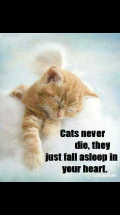 There's the dog people and then there's the cat people, and that battle may rage on forever. Cats are social creatures capable of relationships with people and let you love them most. Pet Loss Quotes, Cat Quotes, Animal Quotes, I Love Cats, Crazy Cats, Cute Cats, Funny Cats, Pet Loss Grief, Pet Remembrance