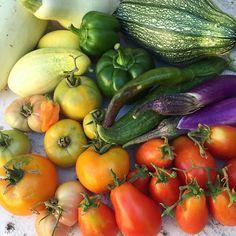 Harvest the rainbow in the morning, eat the rainbow all day! #bbafeattherainbow @blossombudandfruit #mybhg