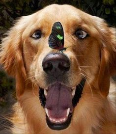 A butterfly on the nose makes you cross-eyed