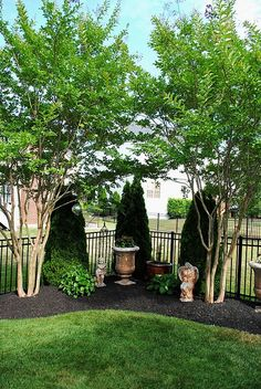Good example of privacy planting, with trio of evergreens at the corner flanked by two faster growing crepe myrtles that frame the ornamental pots. #LandscapingIdeas