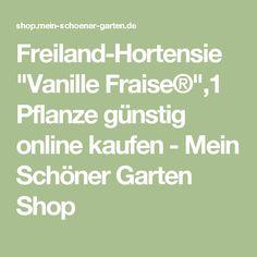 """Freiland-Hortensie """"Vanille Fraise®"""",1 Pflanze günstig online kaufen - Mein Schöner Garten Shop"""