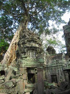 Jungle Temple, Angkor Wat, Cambodia