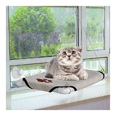 Homdox Comfortable Cat Window Perch Cozy Kitty Window Bed Stable Kitty Cot Sunny Seat -- Can't believe it's available, see it now : Furnitures that cats love Cat Window Hammock, Cat Window Perch, Window Bed, Cat Perch, Cat Hammock, Window Seats, Cat Shelves, Shelf, Cat Tree Condo