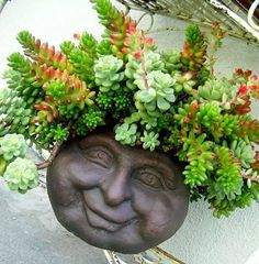 Cheery container for Sedum rubrotinctum, or commonly variously known as Pork and Beans, Christmas Cheer, Banana Cactus, Jelly Bean Plant. Garden Art, Best Indoor Plants, Plants, Face Planters, Succulents, Sedum, Flowers, Succulent Wall Planter, Planting Succulents