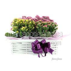 Canasta Blanca Kalanchoe Color !| Envia Flores