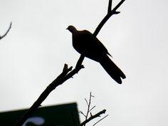 Zbigniew Włodarski, ptaszarnia: chińskie ptaszki