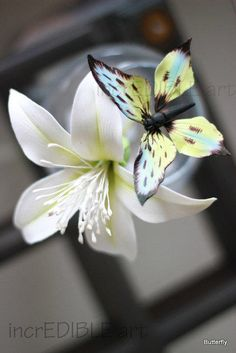 Butterfly sitting over White Bobax flower!