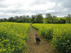 Waendel walk Wellingborough, 10 - 11 mei 2014   Foto's Groot-Brittannië   Vakantie   MijnAlbum - Fotoalbum Gratis Online!