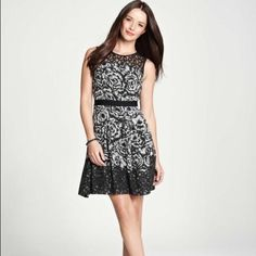 Ann Taylor Sheath Lace Black Moonlight Dress