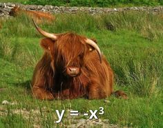 Best Funny Memes Hilarious Pictures That Will Make Your Day 16 Math Jokes, Math Humor, Funny Math, Farm Animals, Funny Animals, Cute Animals, Maths In Nature, Highland Cattle, Funny Quotes For Teens