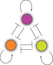 *modelagem na prática da biologia sintética:células podem ser estudadas pelas interações entre entre as proteínas, DNA e metabólitos envolvidos nos processos de sinalização e de troca de matéria e energia. Entender um sistema celular (e depois modificá-lo) requer modelos quantitativos capazes de prever as complexas interações intracelul...