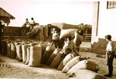 Una vez lleno, pesado y cosido se cargaba en los transportes para las entregas obligatorias o voluntarias al SENPA
