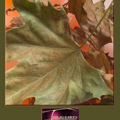 Leaves' by CrismanArt African Art, Plant Leaves, Art Photography, Digital, Creative, Plants, People, Painting, Fine Art Photography