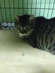 ZOEY HAS BEEN RESCUED BY CAT ADOPTION TEAM, WILMINGTON, FOR FOSTER CARE