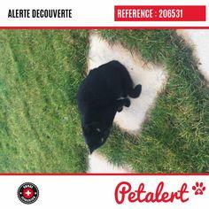 Cette Alerte (206531) est désormais close : elle n'est donc plus visible sur la plate-forme Petalert Suisse. L'animal a pu être remis à son propriétaire Merci pour votre aide. Visible, Aide, Dogs, Switzerland, Thanks, Shape, Dog, Animaux, Pet Dogs