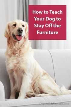 How Toteach Your Dog To Stay Off The Furniture How Toteach Your