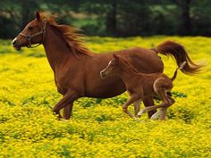 Spring time in the flowers for mom and foal