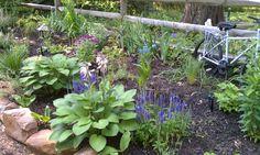My sweet little <3 flower bed <3