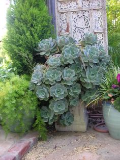 .Shades of green, love the texture these plants have